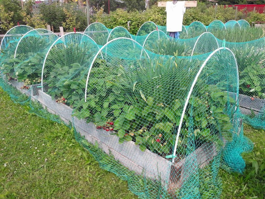Сетки для фермерских хозяйств